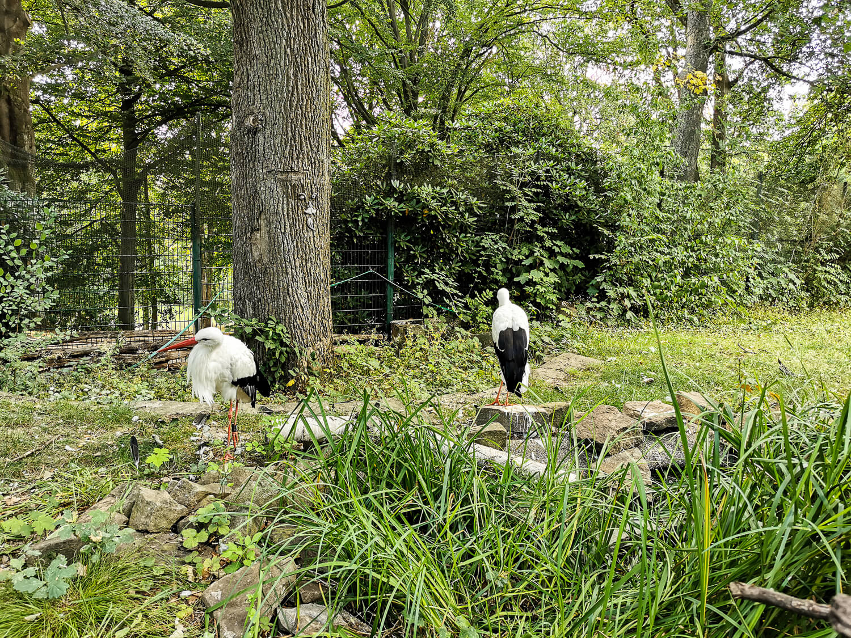 Auch Störche gibt's im Tierpark