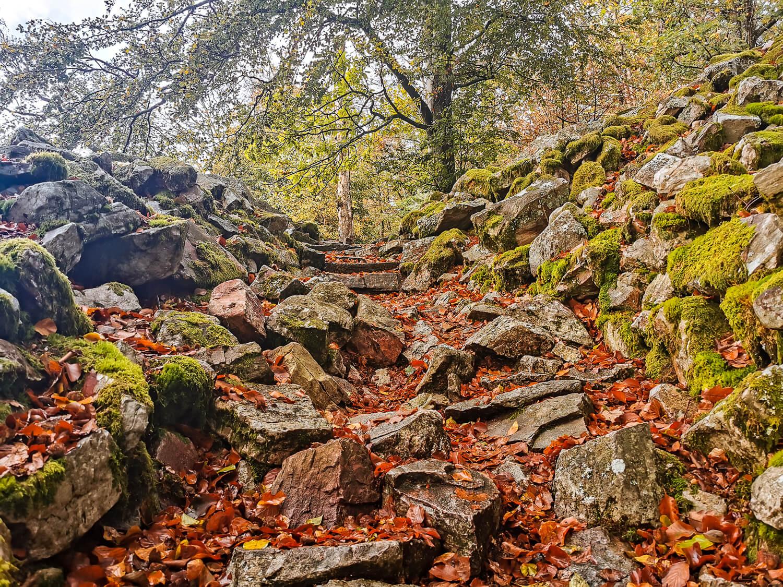 Im Herbst ist der Nationalpark besonders bunt