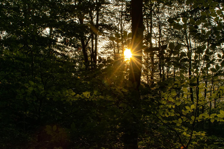 Rangerwanderung mit Begleitung der untergehenden Sonne