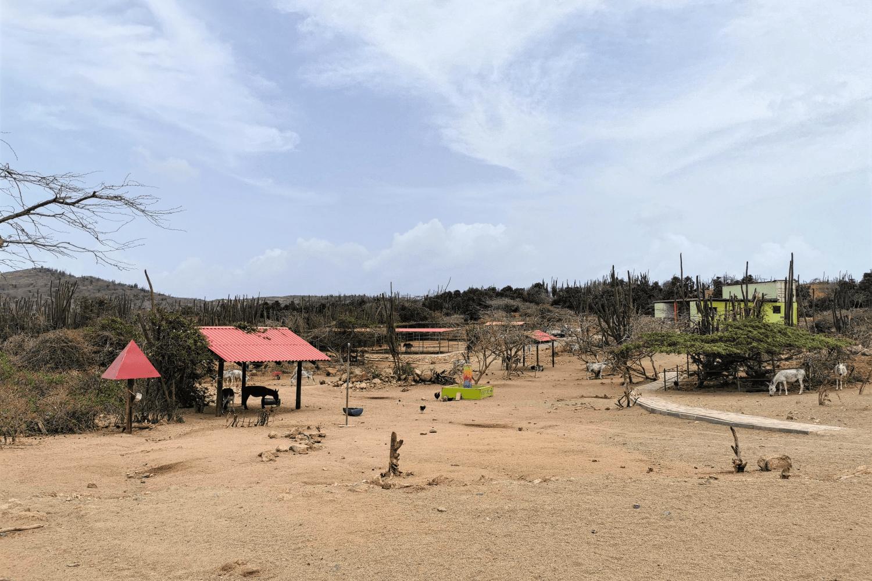 Die Esel-Rettungsstation