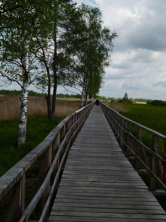 Der Steg führt durchs Moorgebiet zum See