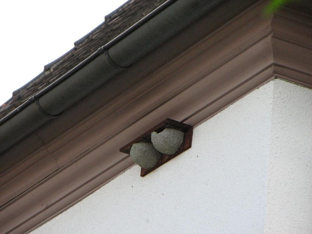 Mehlschwalbennester am Pfarrhaus