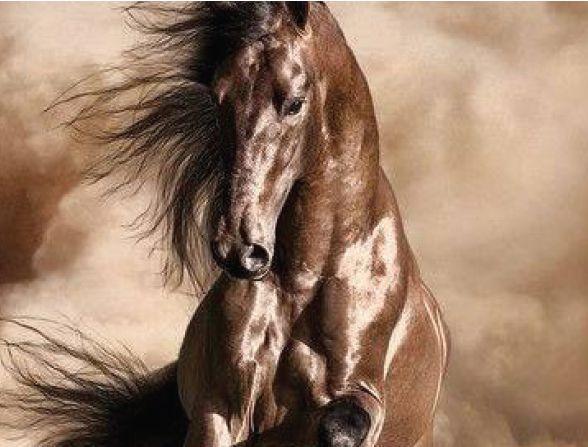 Castello di darany, FISE, federazione italiana sport equestri, imparare a cadere da cavallo