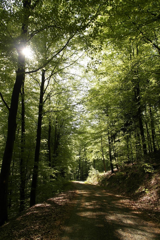 Försterweg im Leuscheider Wald