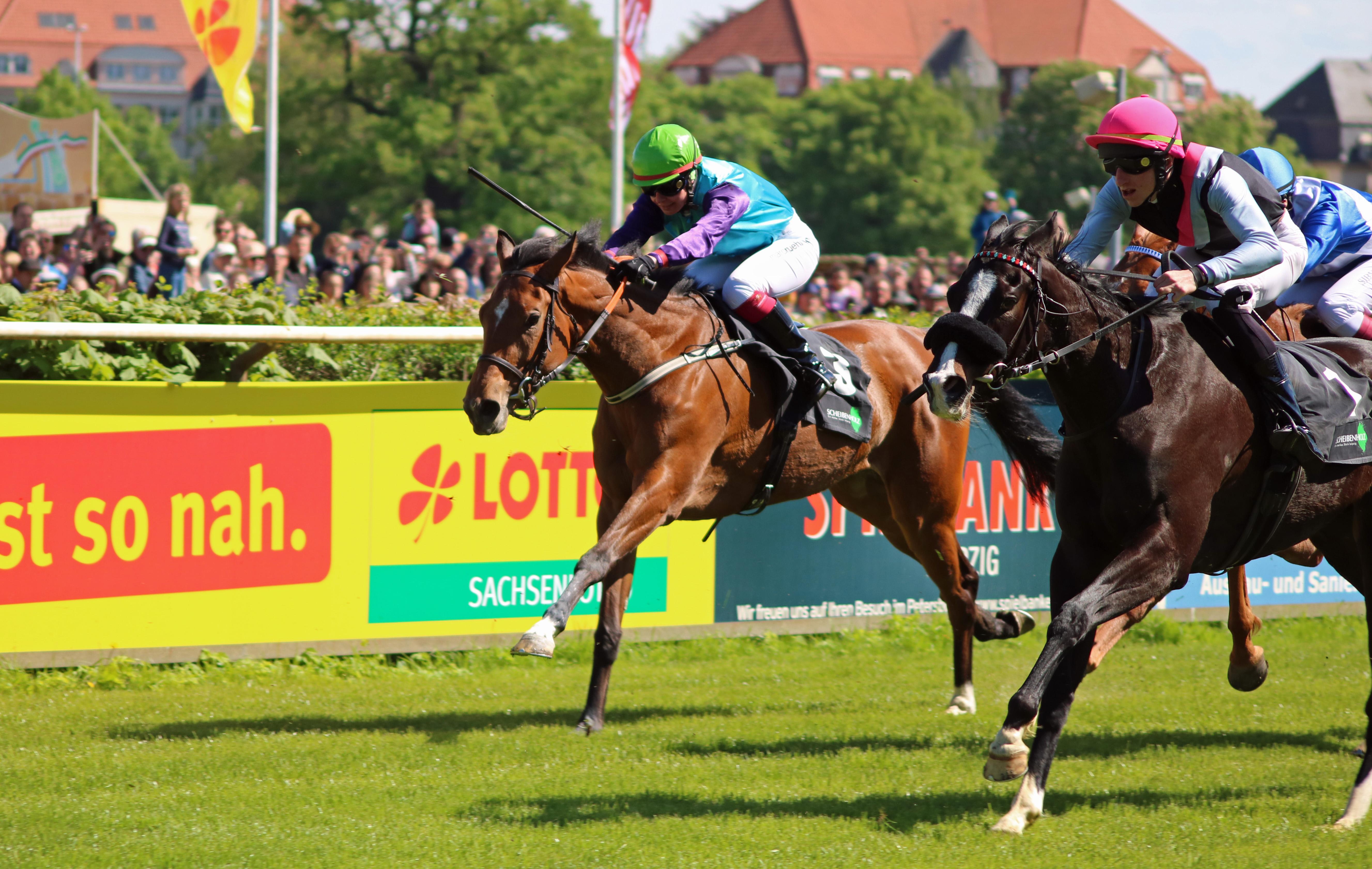 Pferde beim Rennen, Rennbahn Hoppegarten bei Berlin