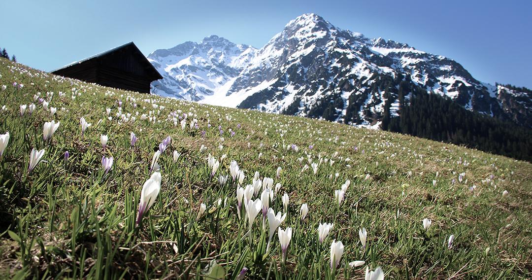 Frühlingserwachen in den Alpen