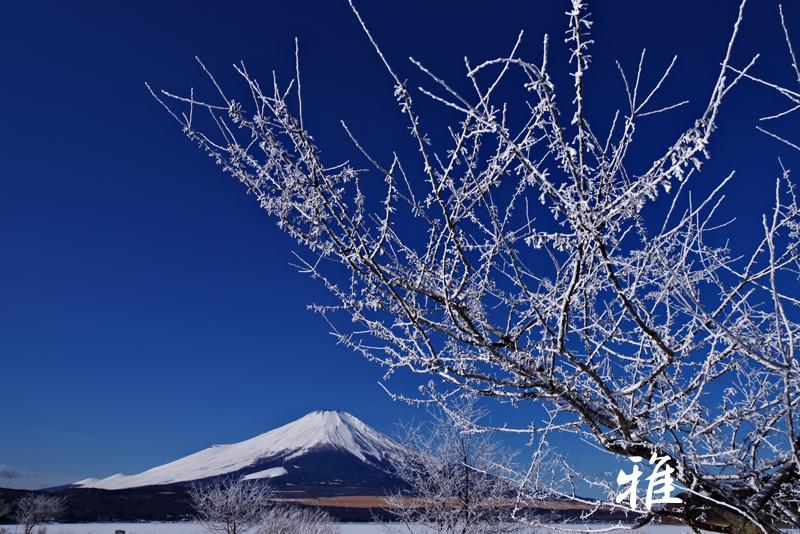 F88 樹氷と富士(Ⅰ) 山中湖にて