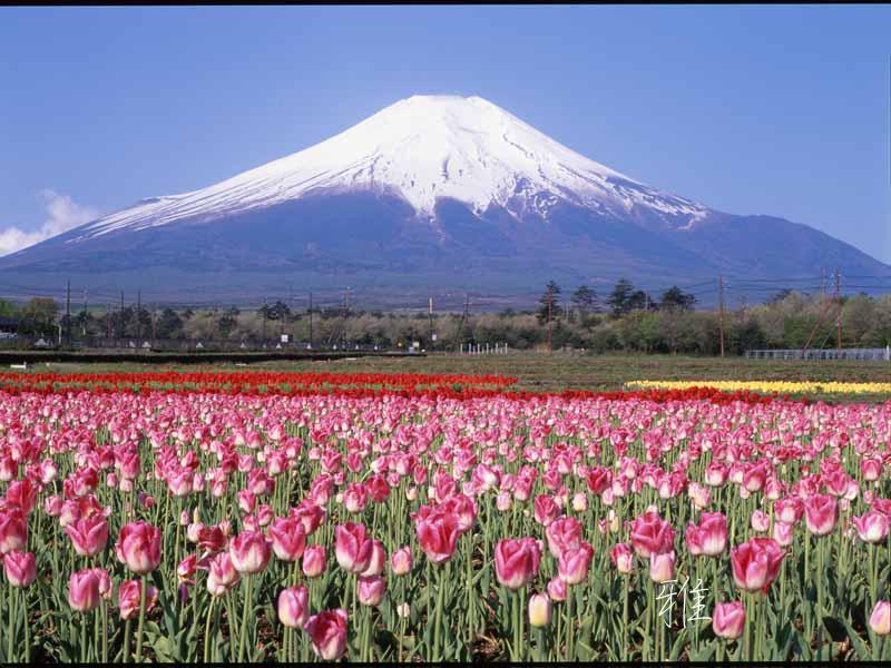H75  花の都公園にて