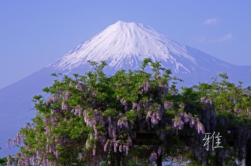 H69  富士川河川敷にて