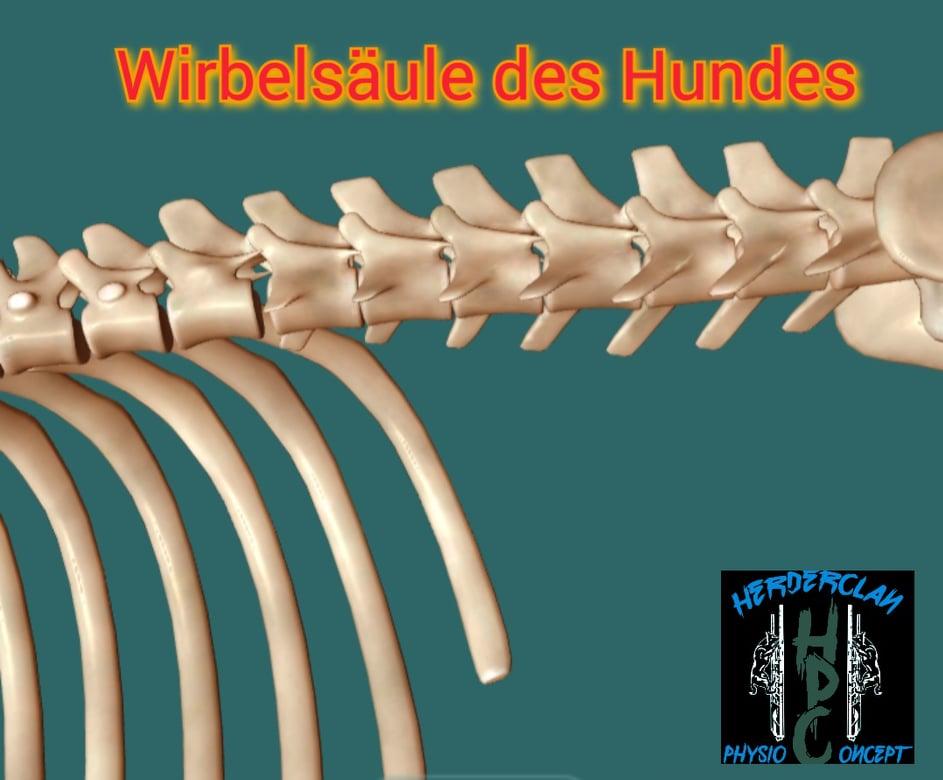 Spondylose beim Hund