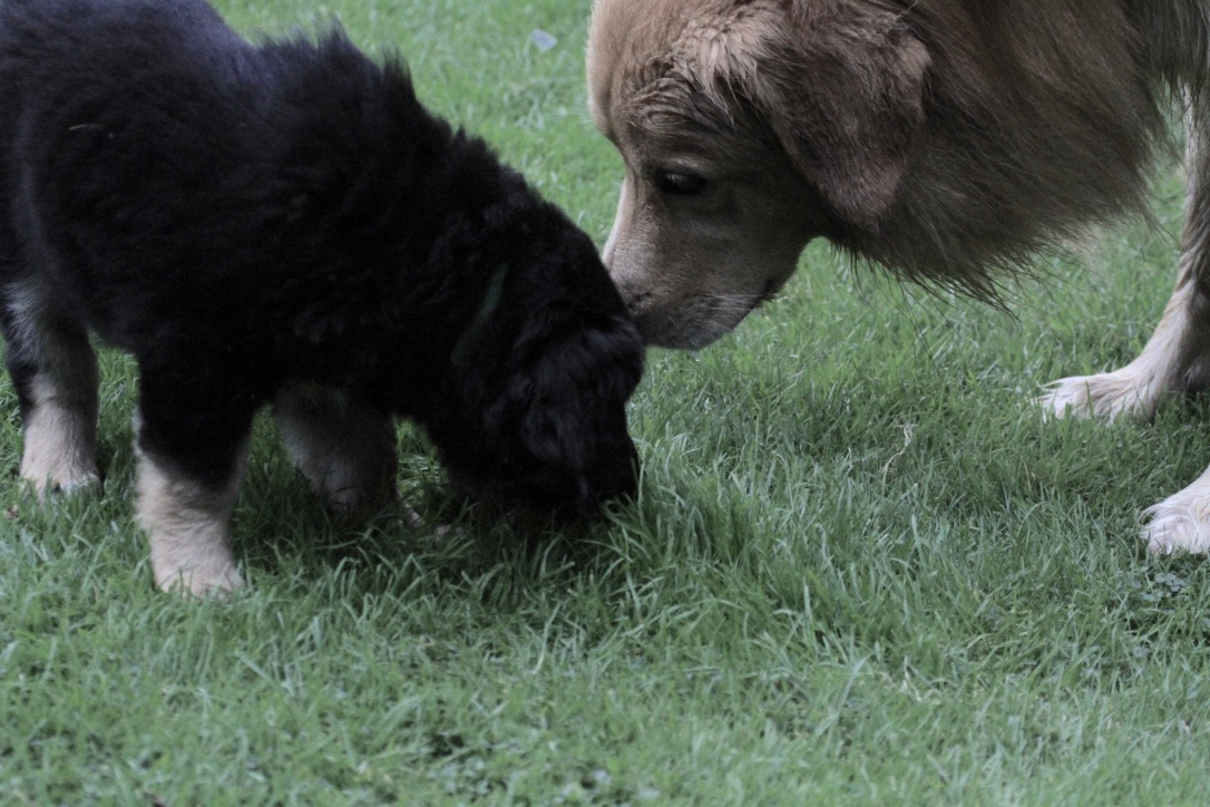 Bella mit Papa : 10.08.2016 Foto Pola Meurer