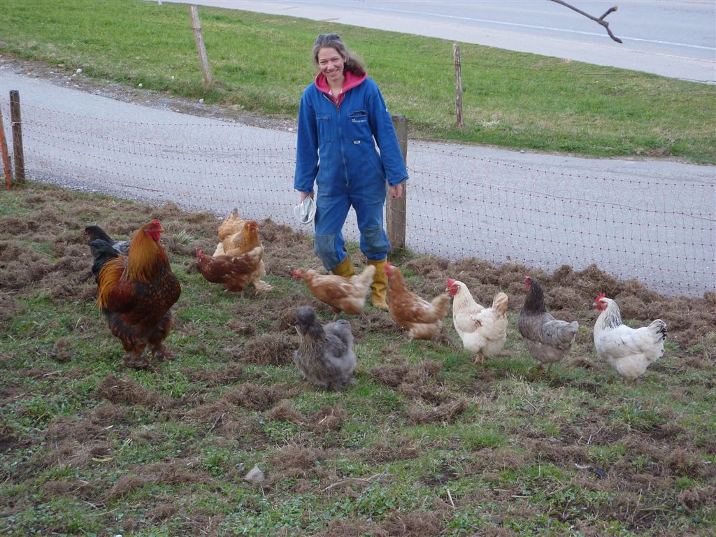 Unsere Biohühner sind geschäftig dran.