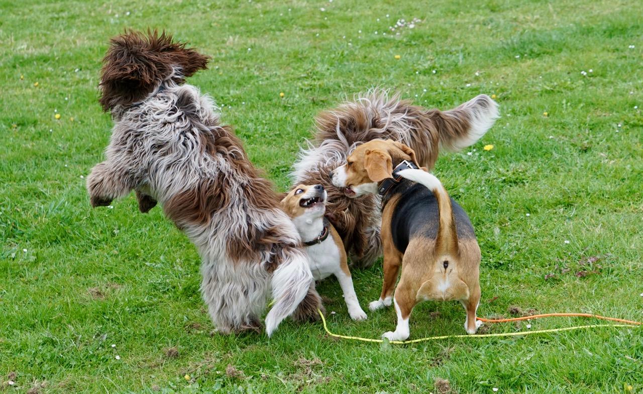 ...schauten beim Tohuwabohu von Dalina, Joko und zwei Beagles zu