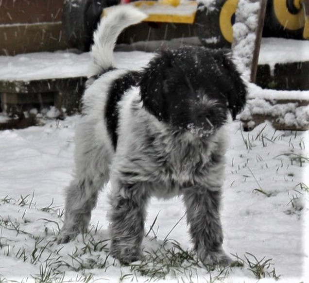 Celes (Royal) entdeckt den ersten Schnee in ihrem Leben.