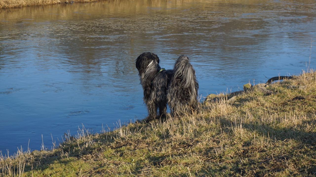 Cooper hält Ausschau, wo der Frühling bleibt...