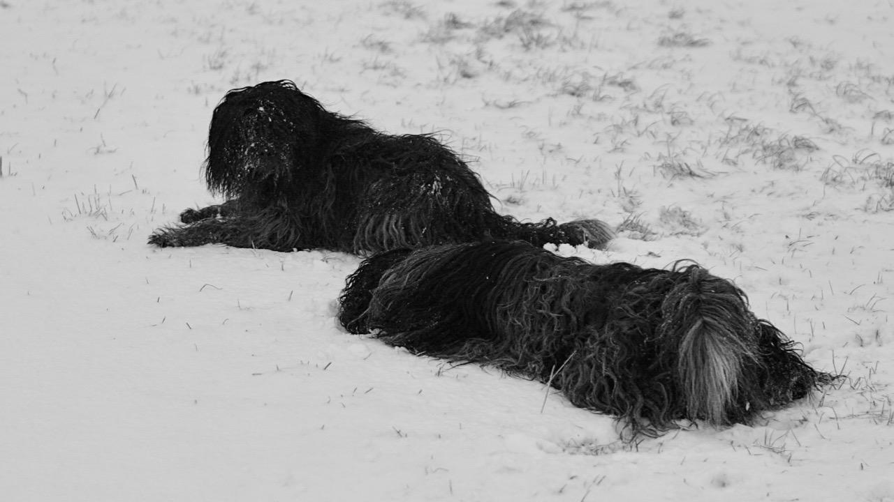 Im Schnee wälzen ist herrlich