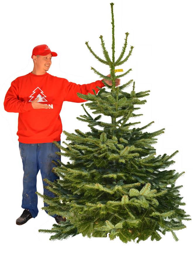 Wer Schmückt Den Weihnachtsbaum.Weihnachtsbaum Hamburg Schmückt Ihren Tannenbaum Mit