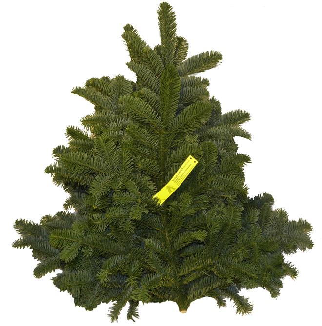 Tannengr n kaufen schnittgr n betellen preise der tannesnzweige zum g nstigen preis - Weihnachtsbaum kaufen hamburg ...