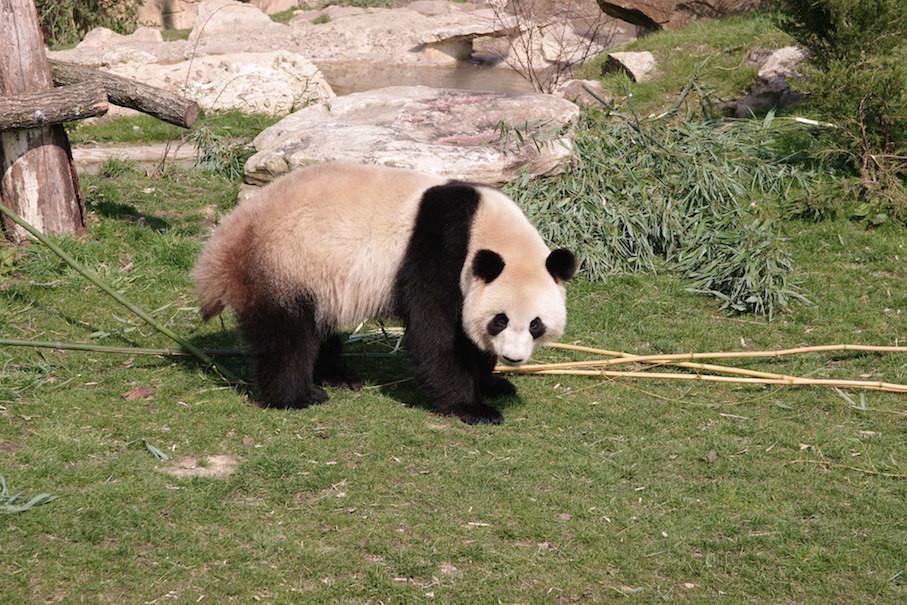 C'est moi, Huan Huan.