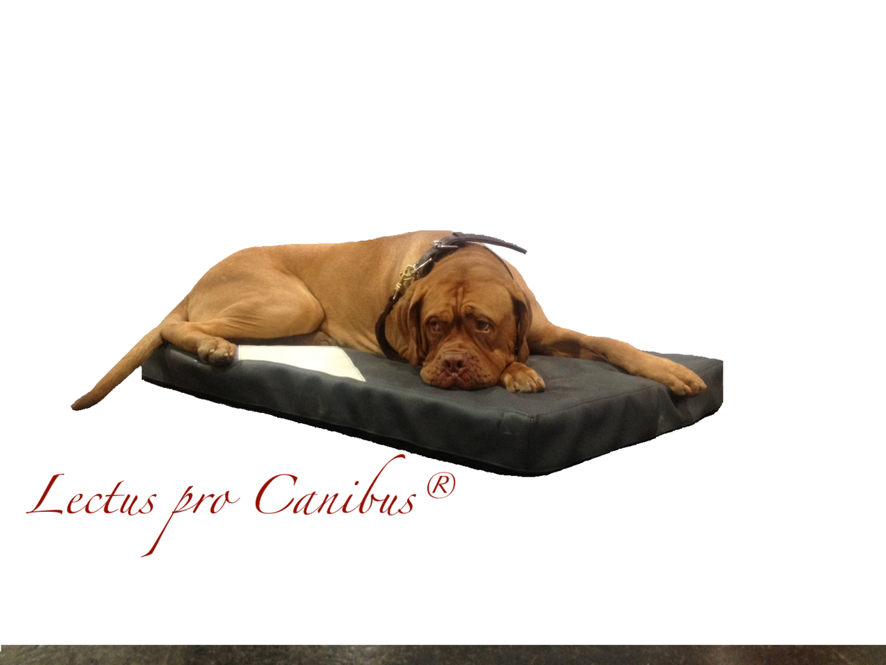 Orthomed Hundebett von Lectus pro canibus®