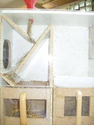 Planos para hacer una maquina de limpiar alpiste p gina for Paginas para crear planos