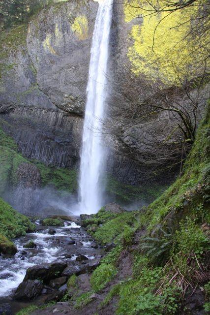 fresh green at the waterfalls, Mount Hood, Oregon