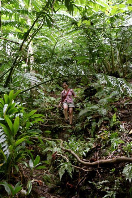 steiler Abstieg durch den Dschungel