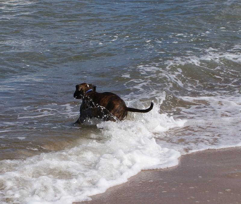 Ich werde auch Wellenreiter.