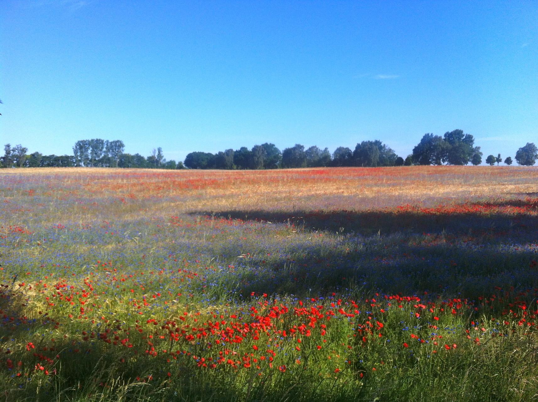 Weite Landschaften in Mecklenburg