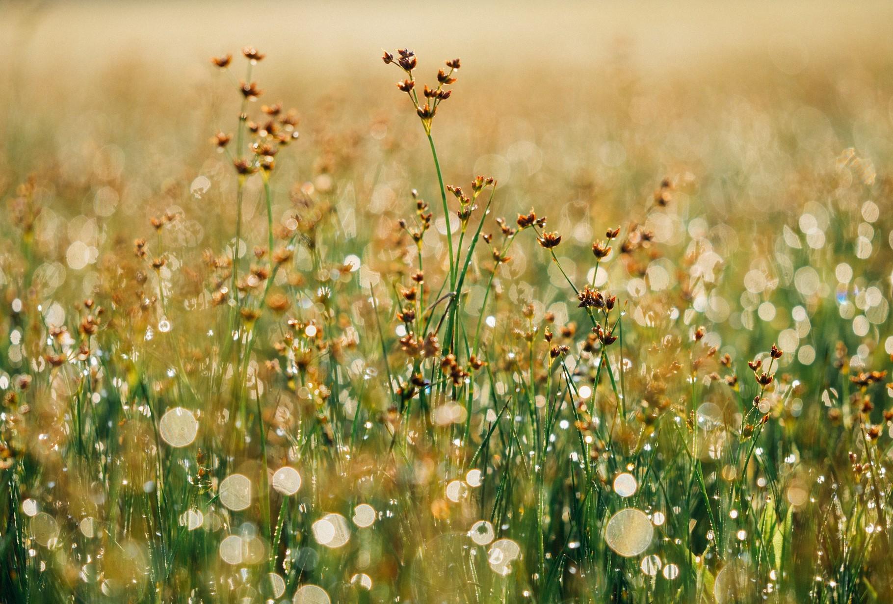 """"""" La connaissance de soi est le commencement de la sagesse et la fin de la peur """" Krishnamurti"""