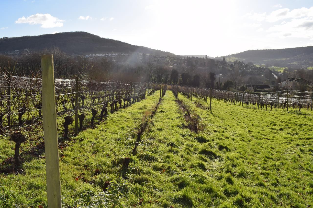 Vignes et vins en Grande-Bretagne