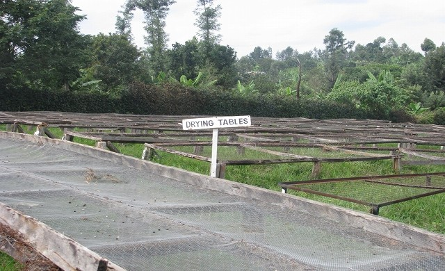 「アフリカンベッド」と呼ばれる乾燥棚。やはりオフシーズンなので、稼働していない状態の風景です。