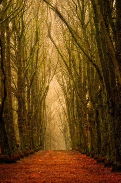 Lars van de Goor: Red Path