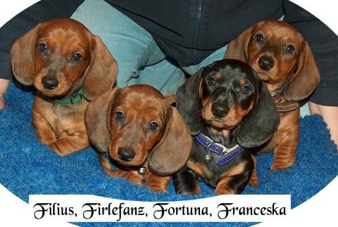 Forti und ihre drei von 8 Geschwistern