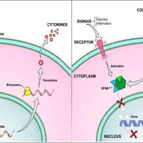 Corticosteroides en el SDRA COVID-19 Evidencia y esperanza durante la pandemia. Traduccion al español.