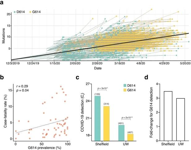 La mutación D614G en la proteína pico del SARS-CoV-2 hace que el virus sea hasta ocho veces más infeccioso.