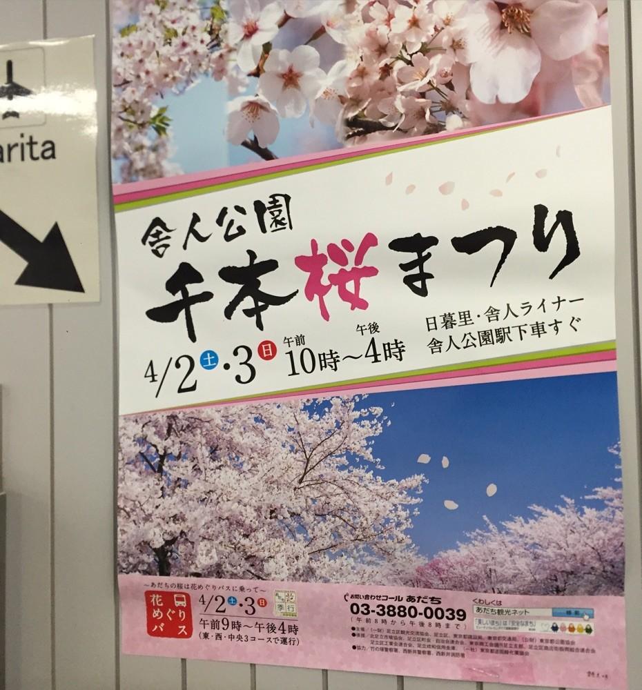 舎人公園千本桜まつり