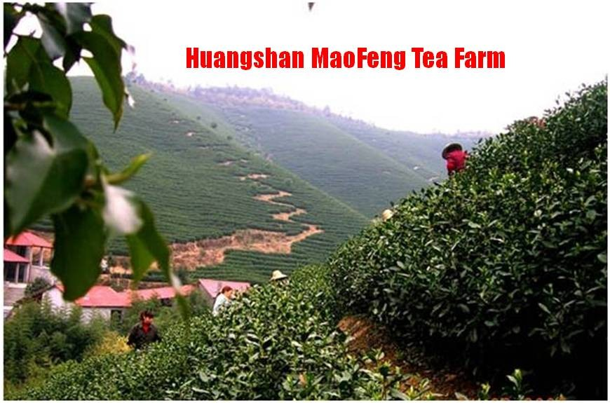 Huangshan Mao Feng Chinese Loose Tea And Teaware
