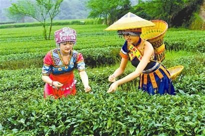 Enshi Yulu Chinese Loose Tea And Teaware Wholesale Buy