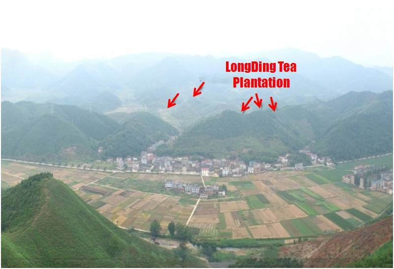 Kaihua Longding Chinese Loose Tea And Teaware Wholesale
