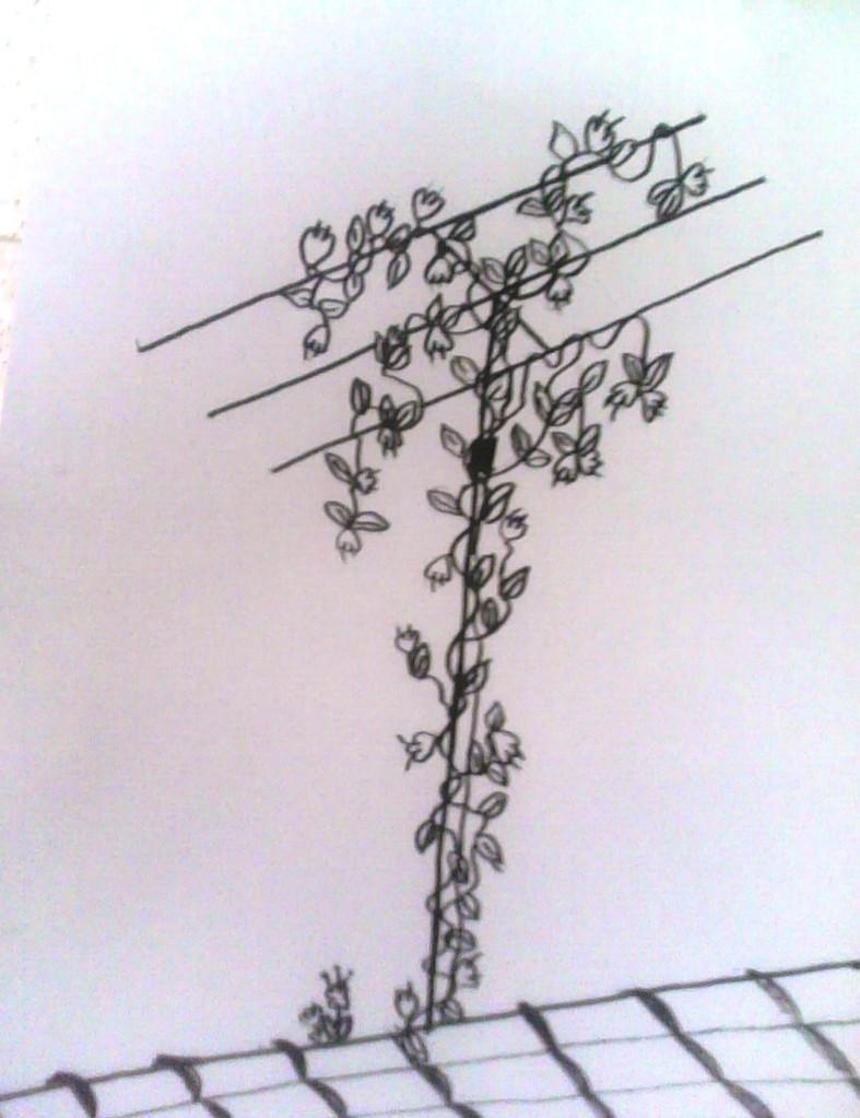 Las cuatro estaciones de mi Yagi: Primavera