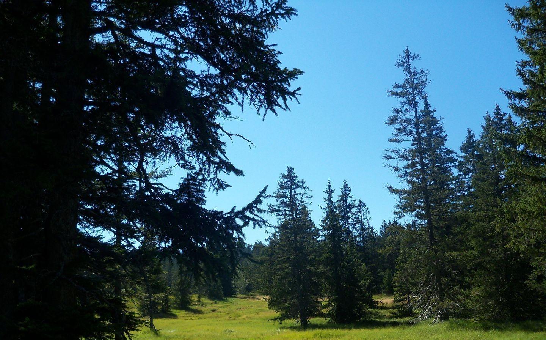 Forêt des tourbières