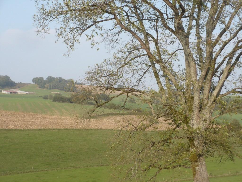 Gîte Lassègues: son environnement champêtre