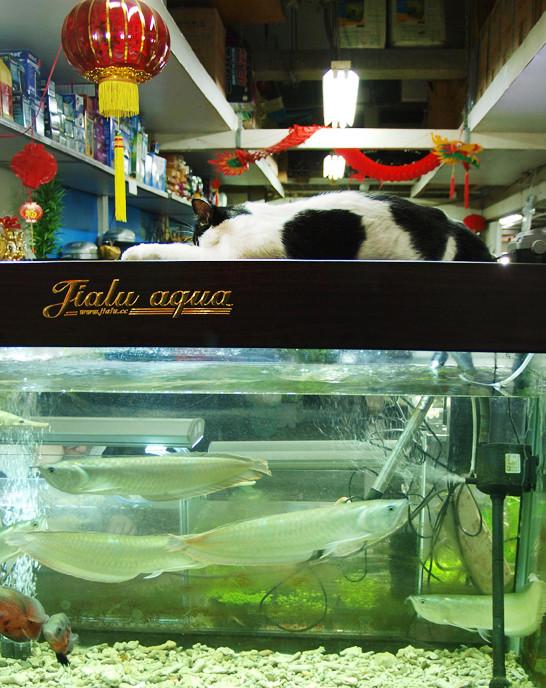 el sueño de cualquier gato..