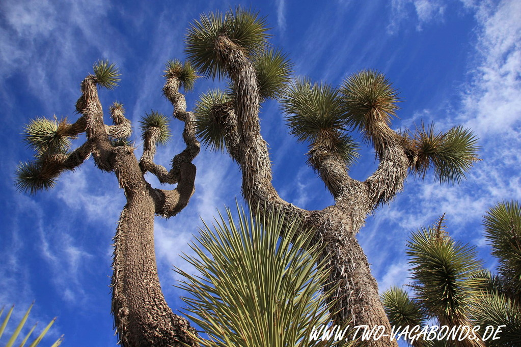 USA 2011 - CALIFORNIEN - JOSHUA TREE NATIONALPARK