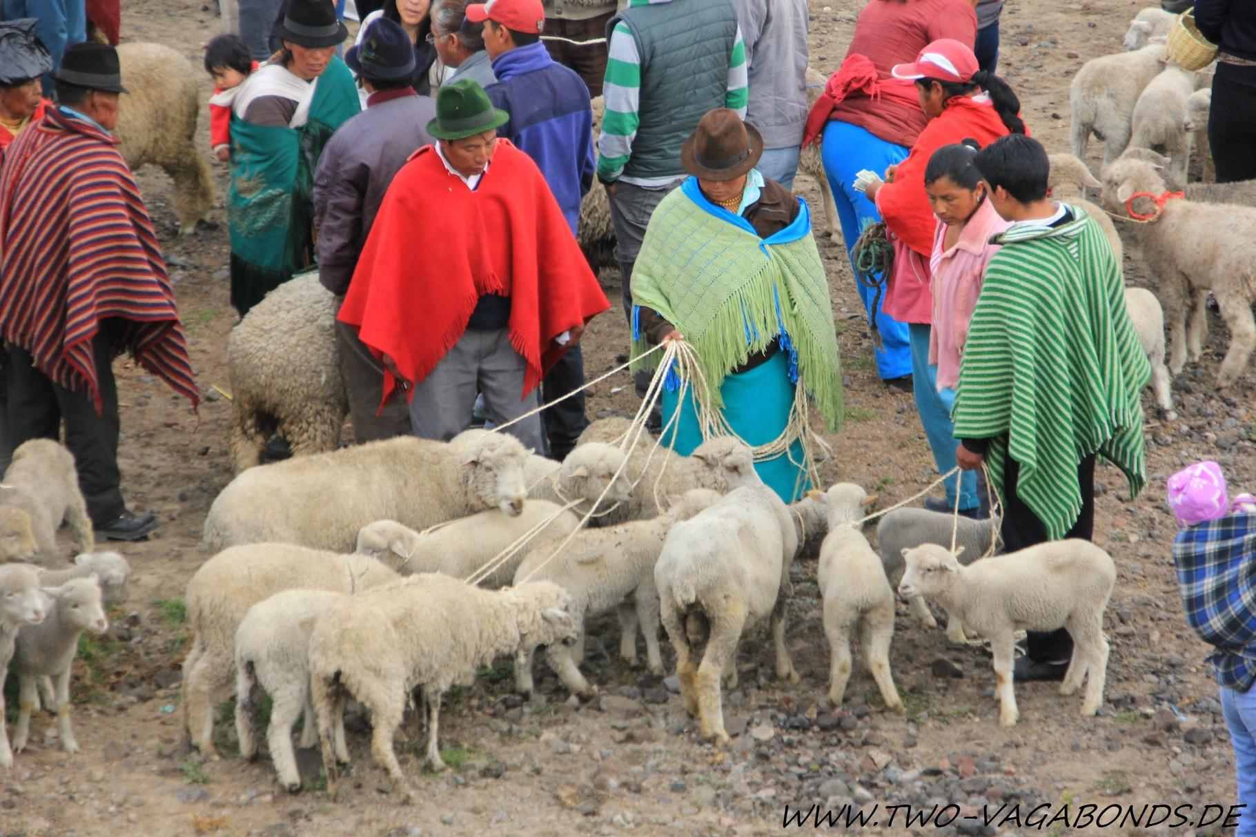 ECUADOR 2014 - VIEHMARKT IN LATACUNGA