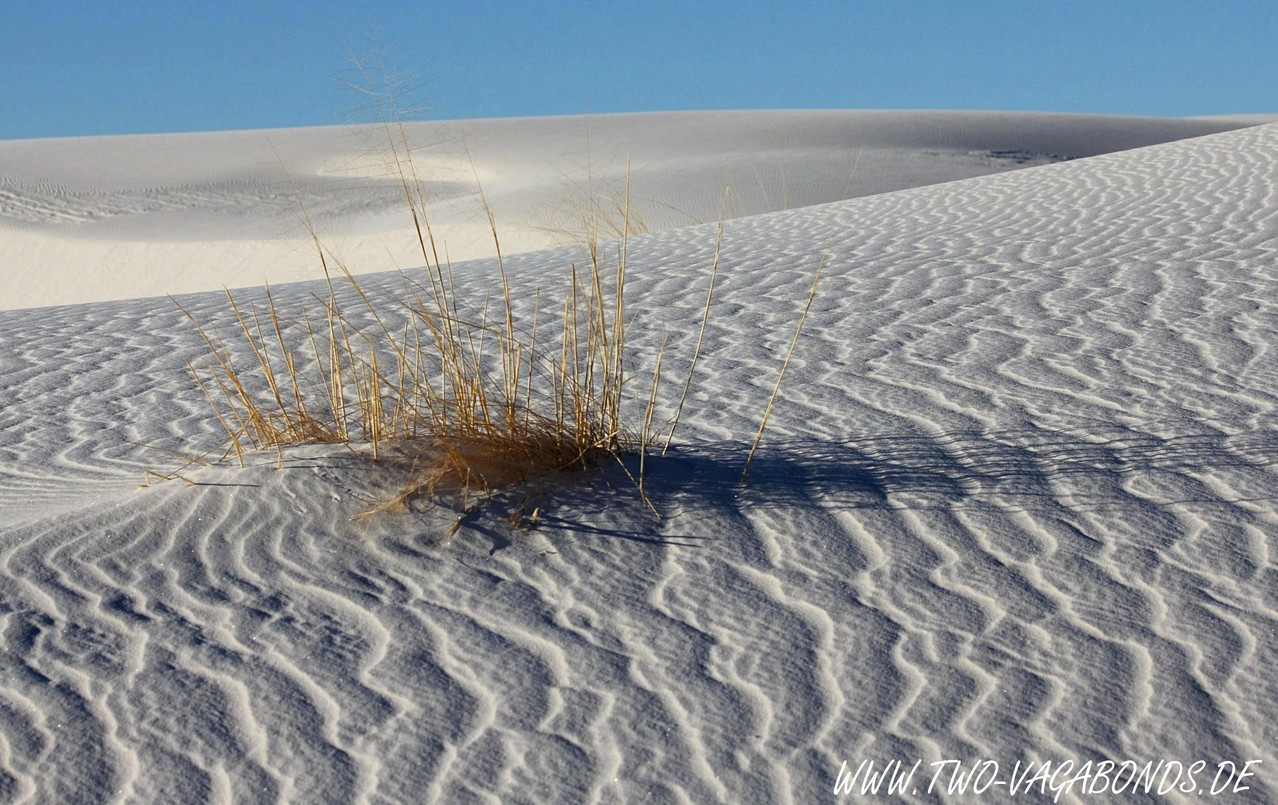 USA 2011 - NEW MEXICO - WHITE SANDS