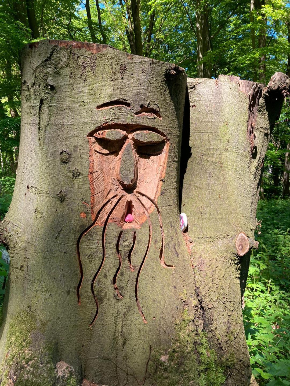 Ein müder Baum am Wegesrand