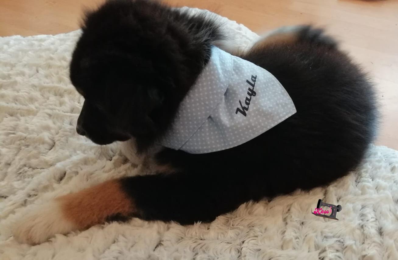 Hundehalstuch personalisiert
