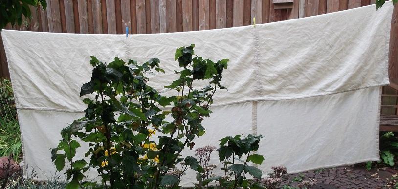 Gotische Decke auf der Wäscheleine : wieder mal ist der Garten nicht groß genug um ein Bild ohne Hindernis zu machen